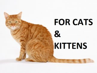 For Cats & Kittens